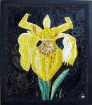 La Danseuse (iris des marais)
