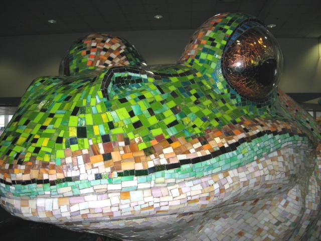 Big Sydney Frog Closeup